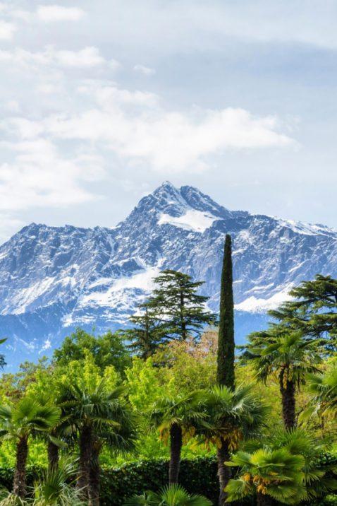 Tropenwald & Berge